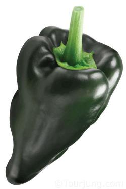 Photo of the Poblano Chili pepper