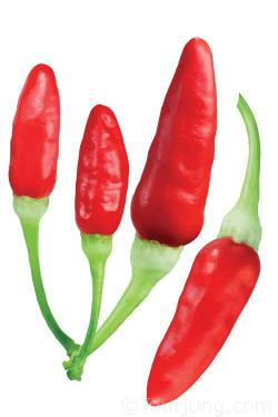 Photo of the tabasco chili pepper