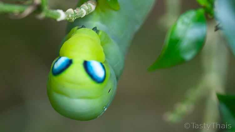 photo of an amazing bug
