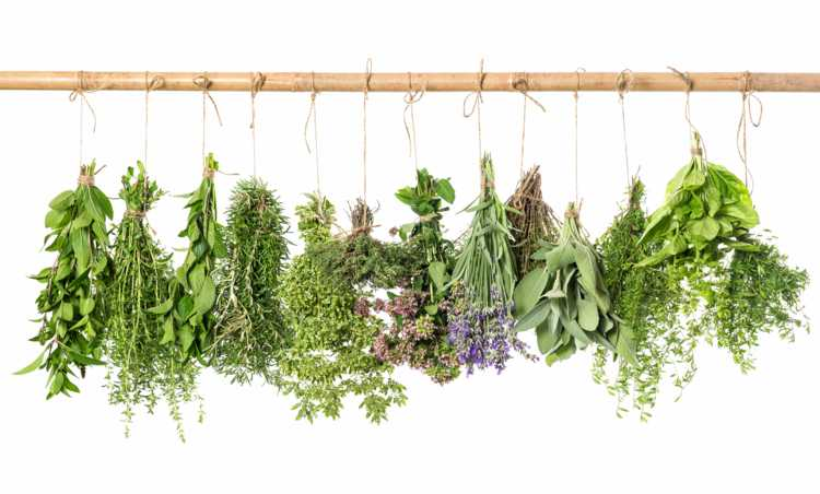 Weestern Cuisine Herbs for Cooking